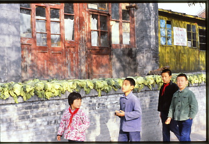 More cabbages drying Beijing, fall 1980; photo by Gail Pellett